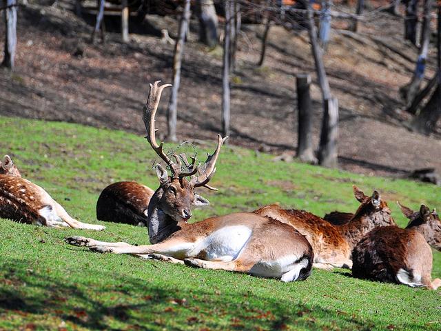 Leśny Park Niespodzianek i inne atrakcje w Ustroniu