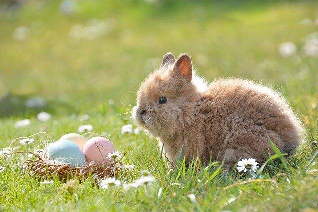 Event Wielkanocny w plenerze – co powinien zawierać?